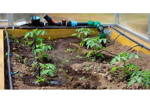 Секреты выращивания овощей в теплице