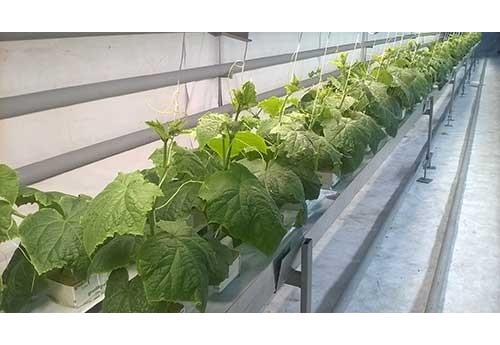 Как вырастить рассаду в теплице