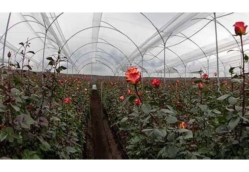 Совместимость основных растений в теплице