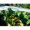 Агроволокно под огурцы (1)
