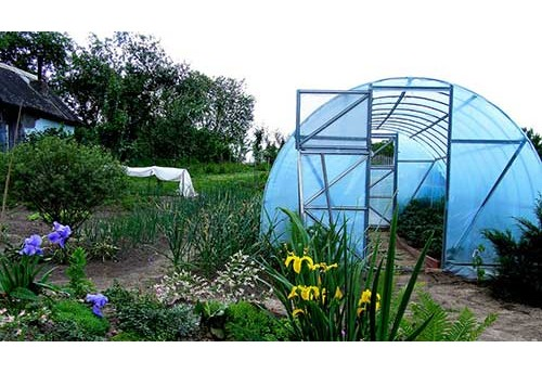 Нужна ли теплица начинающему огороднику