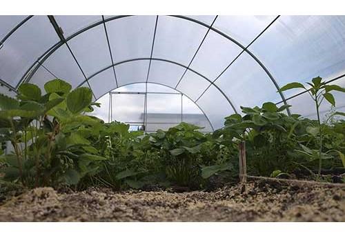 Выбор культур для выращивания в теплице