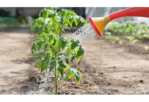 Эффективное применение в садоводстве борной кислоты