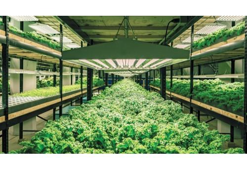 Характеристика парника для выращивания зелени