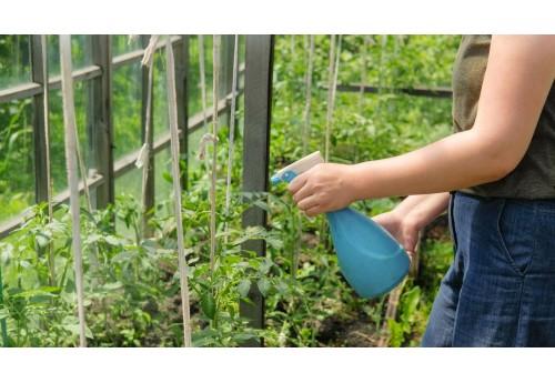 Как и чем провести подкормку помидор