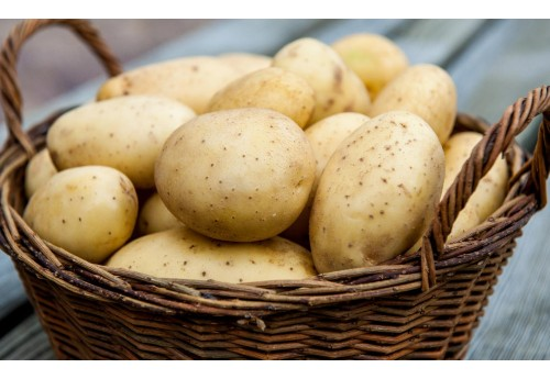 Картофель по голландской технологии