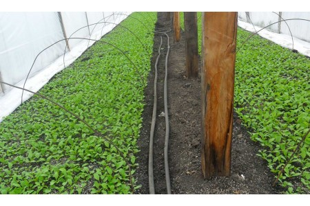 Методика выращивания редиса