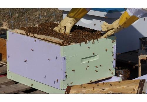 Опасность пчел на дачном участке