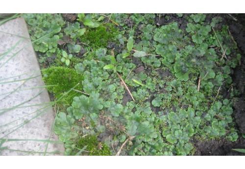 Почему зеленеет земля в теплице