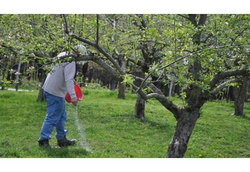 Подкормка яблони весной