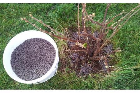 Подкормка кустарников весной для их лучшего роста