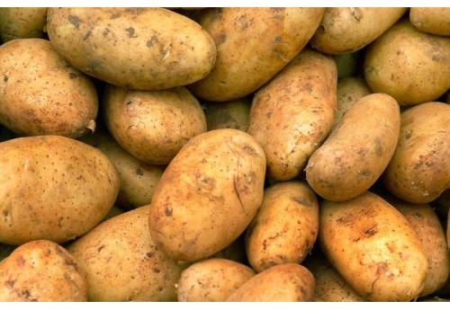 Секреты выращивания картофеля сорта Винета