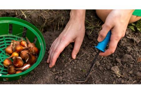 Технология посева на зиму лука севка