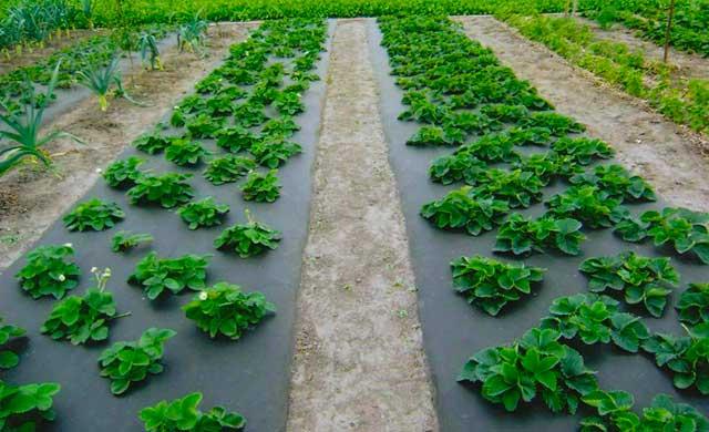 спанбонд для выращивания культур