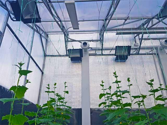 оборудование теплицы с односкатной крышей