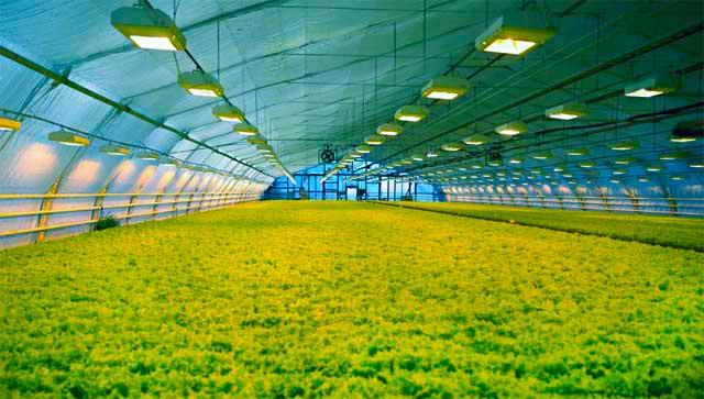 фермерские теплицы для промышленности