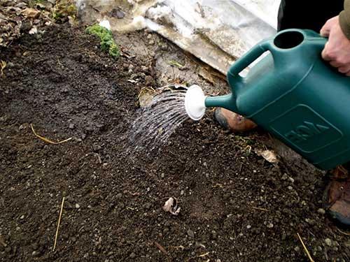 Дезинфекция почвы