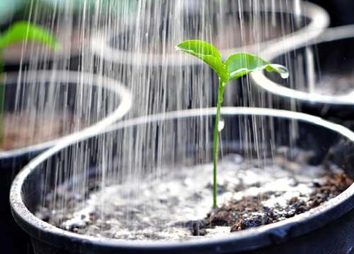 Определение влажности почвы