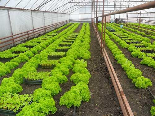 Проблемы при выращивании зелени