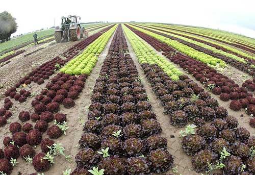 Влияющие на урожайность овощных культур факторы