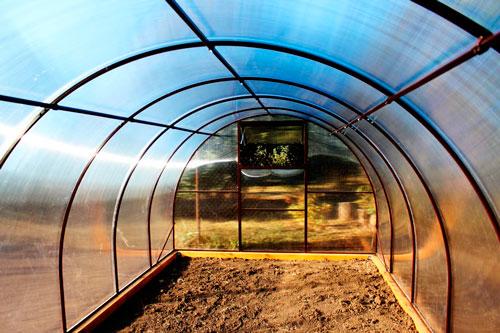 Выращиваем перцы в теплице из поликарбоната