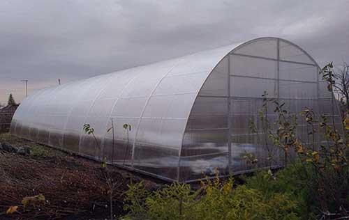 Арочная теплица, имеющая ширину 8 метров
