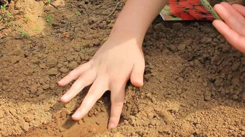 Особенности посадки редиса под зиму - что нужно знать