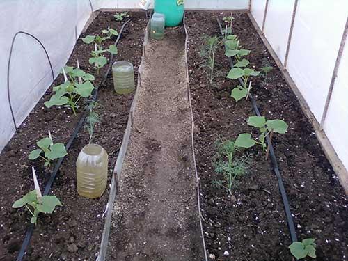 Полив помидор и огурцов