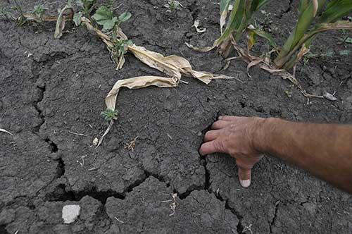 Причины гибели урожая