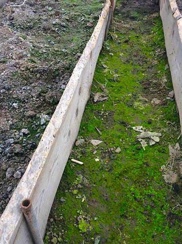 Причины возникновения зелены грунта в теплице