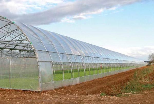 Теплица для фермеров от «Теплица Маркет» в Полтаве