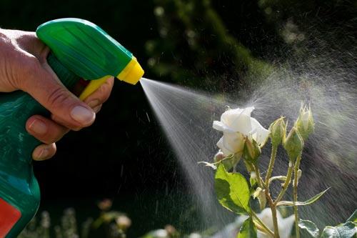 Эффективное применение в садоводстве и огородничестве борной кислоты