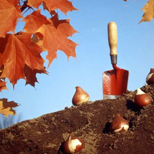 Что сажать осенью на дачном участке
