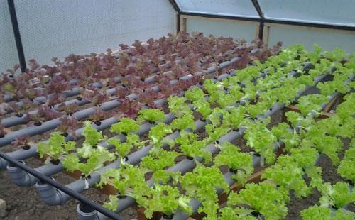 Что выгодно выращивать в теплице весь год