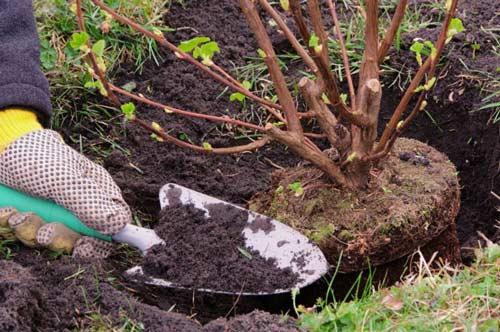 Какие деревья и кустарники лучше сажать осеннее время года