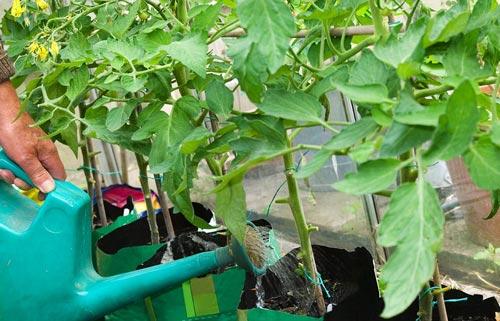 Фунгициды для растений