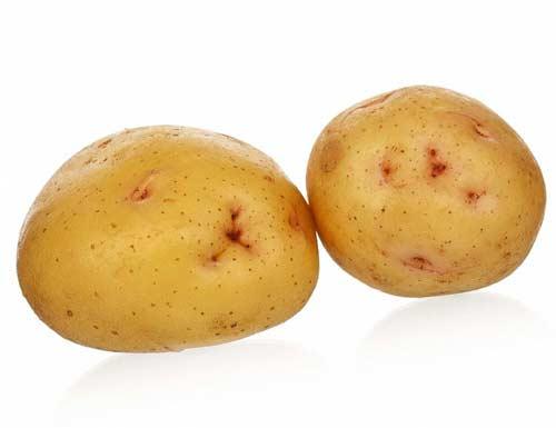 Особенности выращивания картофеля сорта Зекура