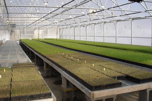 Характеристика теплицы для выращивания зелени