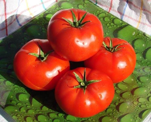 Характеристика тепличных сортов томатов для выращивания