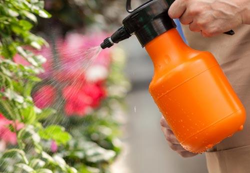 Использование акарицидов для растений - рекомендации