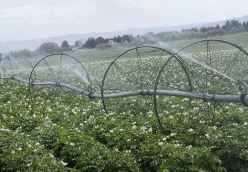 Эффективный полив картофеля по сезону
