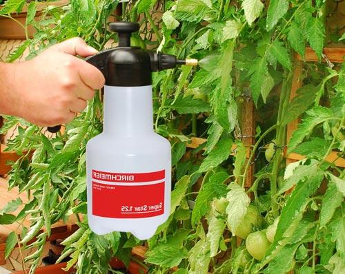 Качественное и полезное опрыскивание томатов