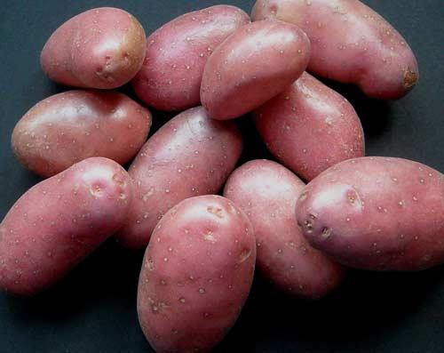 Картофель сорта Беллароза