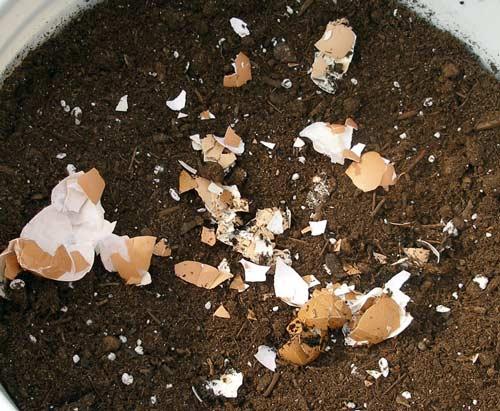 Когда применяется яичная скорлупа как удобрение