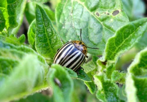 Насекомые-вредители урожая