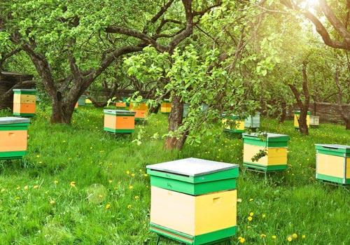 Чем опасны пчелы на дачном участке
