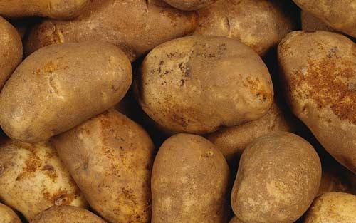 Описание картофеля сорта Джелли