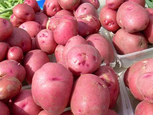 Особенности картофеля Ред Скарлет