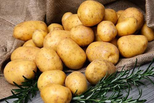 Особенности картофеля сорт Латона