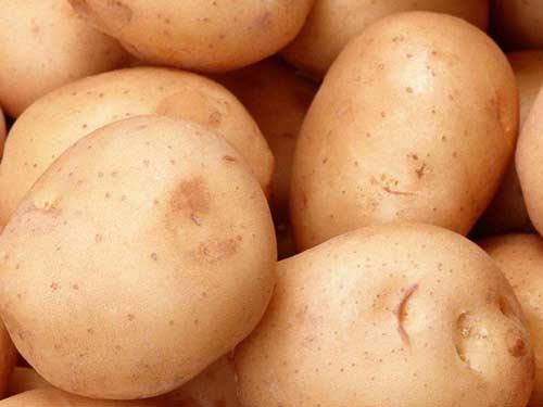 Картофель сорта Аврора и его выращивание